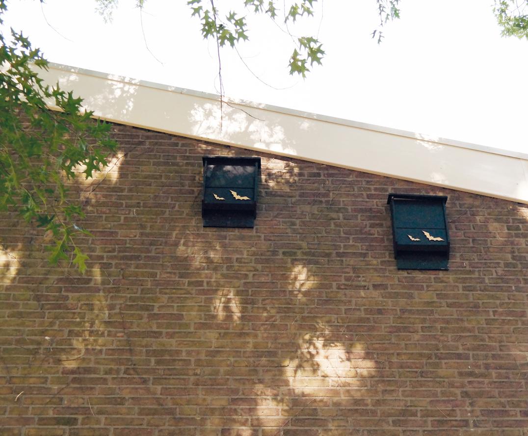 Voorafgaand aan de verduurzamingswerkzaamheden is flora- en faunaonderzoek uitgevoerd. In een aantal gevallen zijn vleermuizen aangetroffen. Aan de kopgevels in de wijk zijn vleermuiskasten bevestigd.